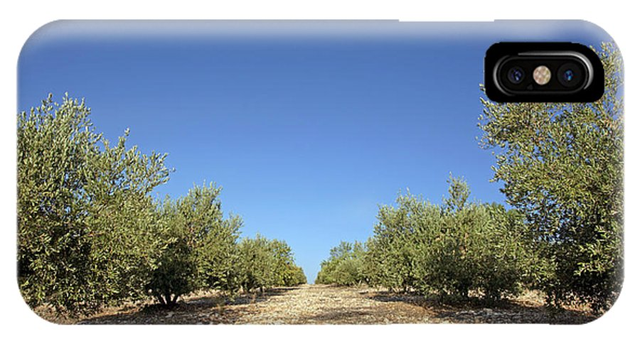 Olea Europea IPhone X Case featuring the photograph Olive Grove by Carlos Dominguez