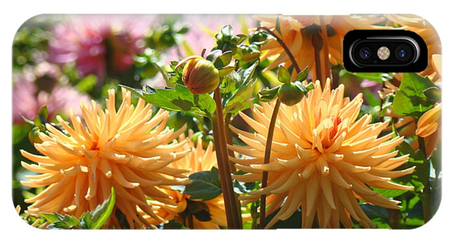 Flowers IPhone X Case featuring the photograph Orange Dahlia Flowers art prints Canvas Framed by Patti Baslee