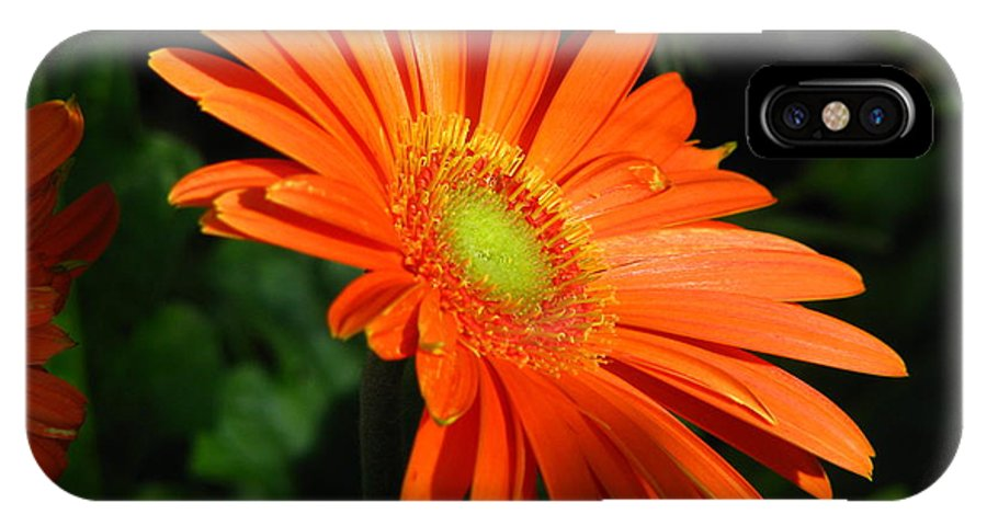 Flower IPhone X Case featuring the photograph Orange Gerber by Paul Slebodnick