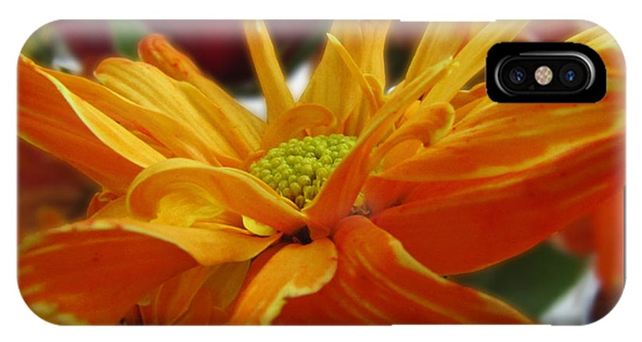 Nature IPhone X Case featuring the photograph Orange Juice Daisy by Debbie Portwood