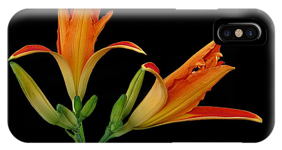 Lily IPhone X Case featuring the photograph Orange Lily On Black by Joyce Dickens