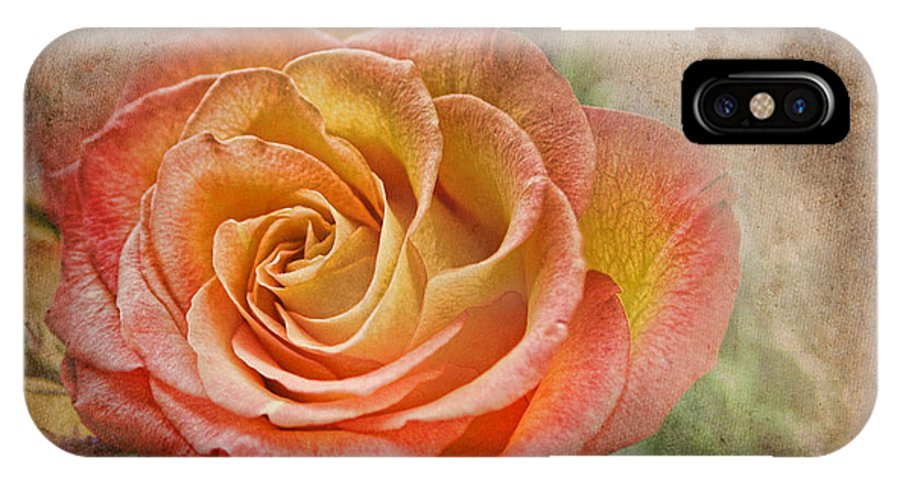 Rose IPhone X Case featuring the photograph Orange Rose by Norma Warden