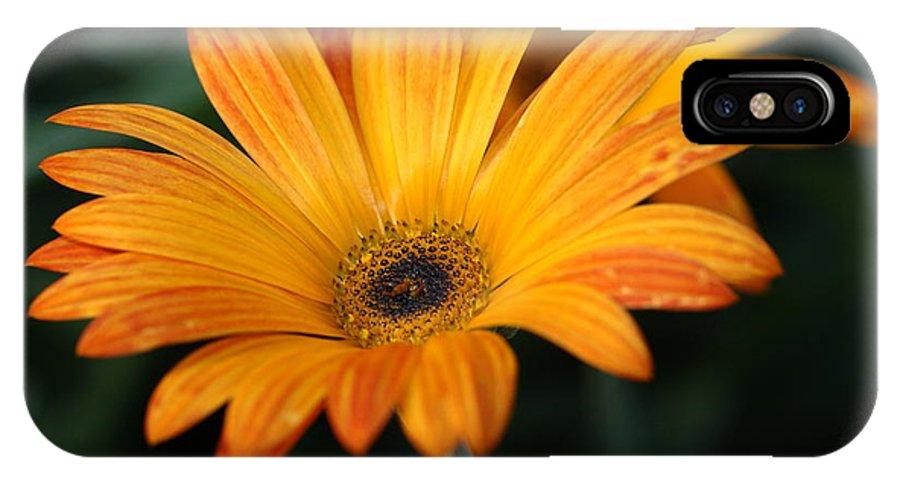 Flower IPhone X Case featuring the photograph Orange Splash by Paul Slebodnick