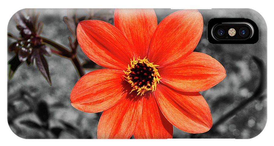 Purple Flower IPhone X Case featuring the photograph Orange Sunshine by Mariola Bitner