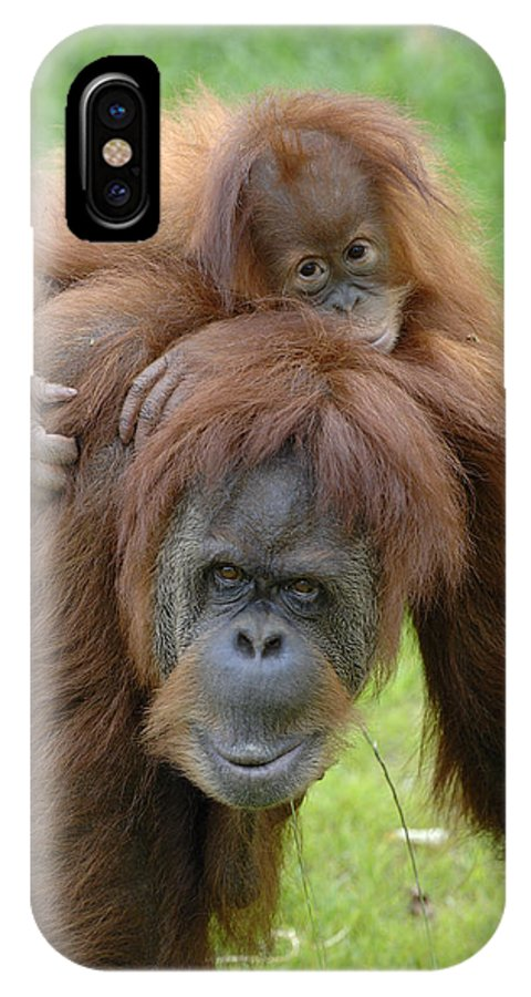 Npl IPhone X Case featuring the photograph Orangutan Pongo Pygmaeus Female by Eric Baccega