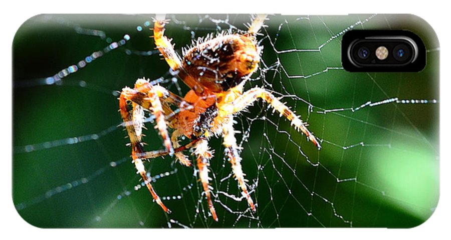 Spider IPhone X Case featuring the photograph Orb Weaver And Lunch by Chriss Pagani
