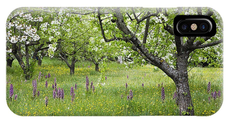 Mp IPhone X Case featuring the photograph Orchard With Flowering Orchids by Konrad Wothe