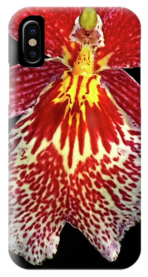 Orchid IPhone X Case featuring the photograph Orchid Hybrid by Dave Mills