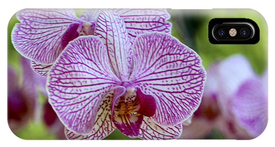 Orchid IPhone X / XS Case featuring the photograph Orchids by Diana Haronis