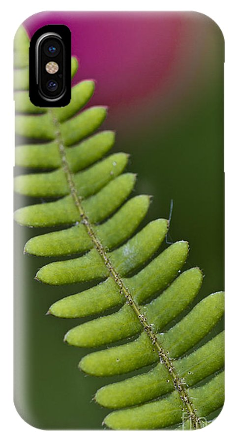 Heiko IPhone X Case featuring the photograph Ornamental Fern by Heiko Koehrer-Wagner