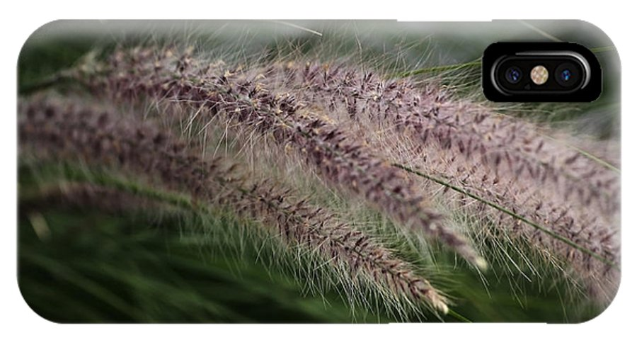 Ornamental Grass IPhone X / XS Case featuring the photograph Ornamental Grass by Marjorie Imbeau