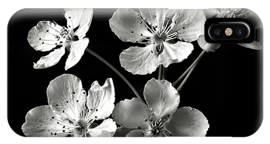 Flower IPhone X Case featuring the photograph Ornamental Pear In Black And White by Endre Balogh