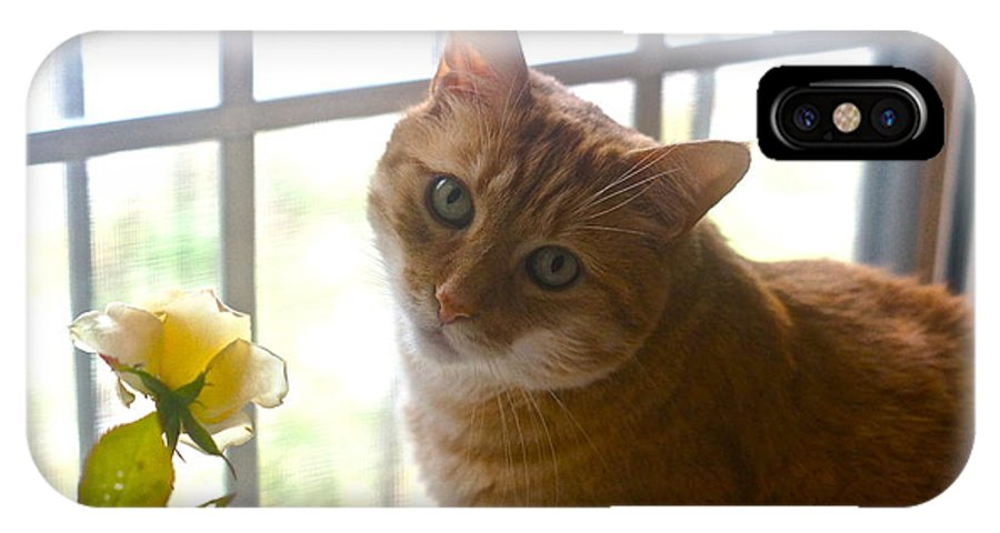 Orange Tabby IPhone X Case featuring the photograph Our New Princess by Byron Varvarigos