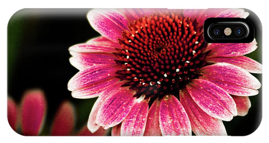 Sun Flower IPhone X Case featuring the photograph Paint The Sun by Kim Henderson