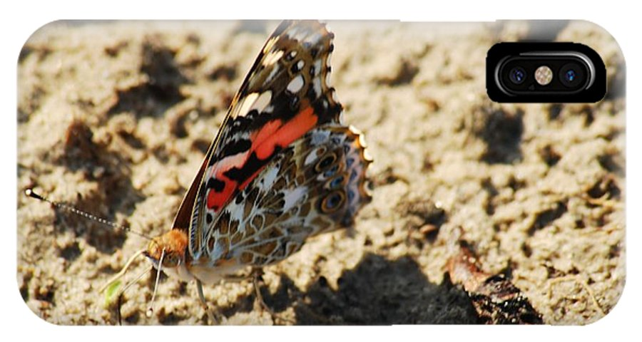 Antenae IPhone X Case featuring the photograph Painted Lady 8591 3341 by Michael Peychich