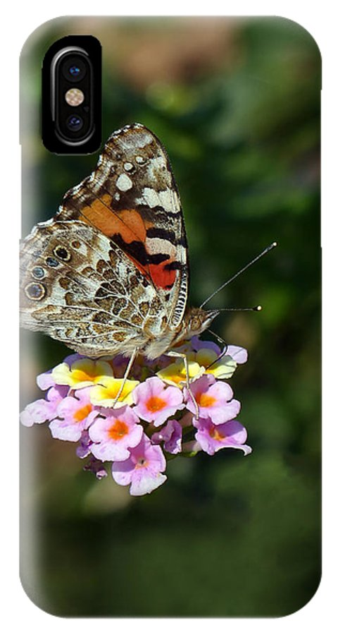 Painted Lady IPhone X Case featuring the photograph Painted Lady by Randall Ingalls