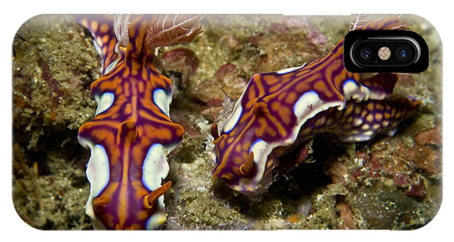 Macro IPhone X Case featuring the photograph Pair Of Miamira Magnifica Nudibranch by Mathieu Meur