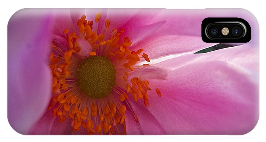 Flower IPhone X Case featuring the photograph Pale Lavender by Arlene Carmel