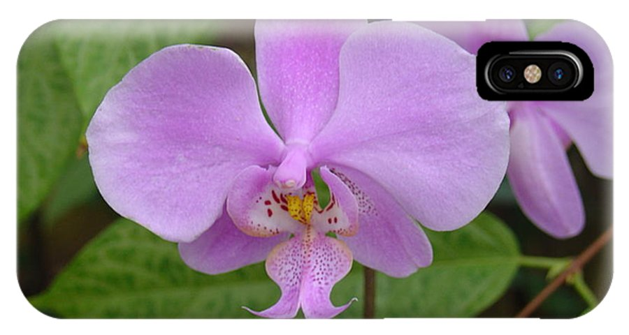 Orchid IPhone X Case featuring the photograph Pale Pink Orchid by Charles and Melisa Morrison