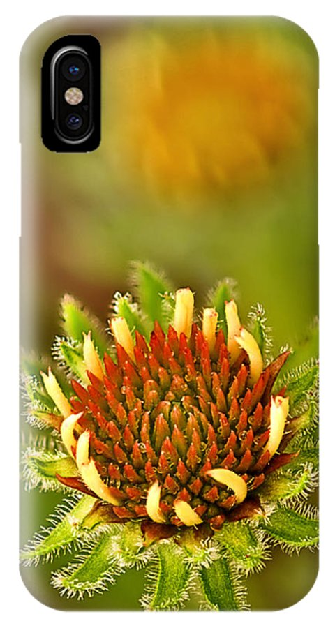 2012 IPhone X Case featuring the photograph Pale Purple Coneflower Bud by Robert Charity