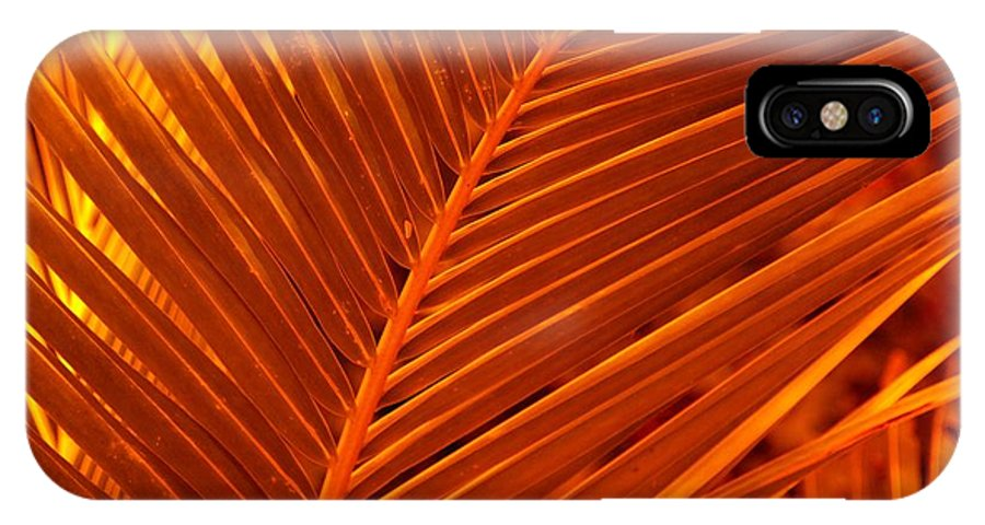 Nature IPhone X Case featuring the photograph Palm Cross Orange by Florene Welebny