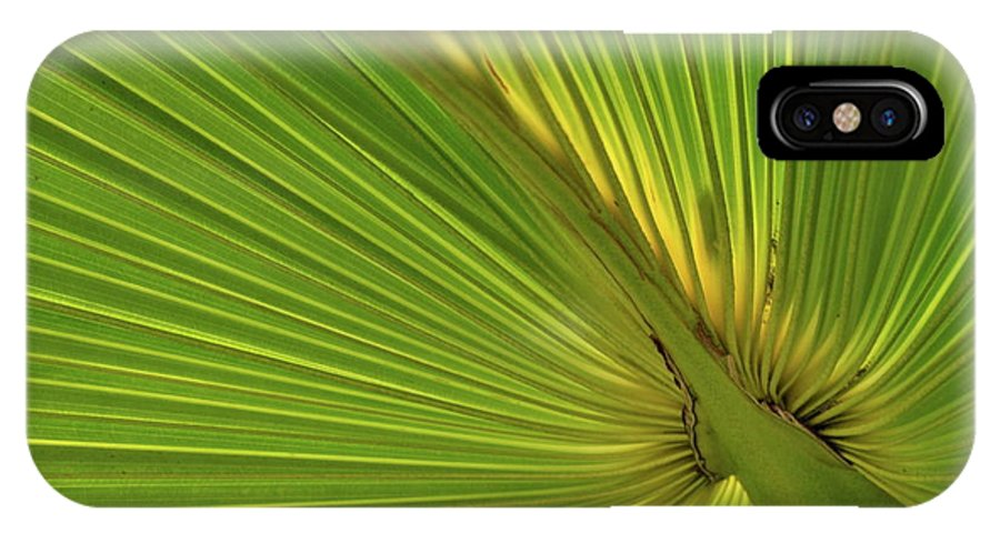 Palm IPhone X Case featuring the photograph Palm Leaf II by JD Grimes