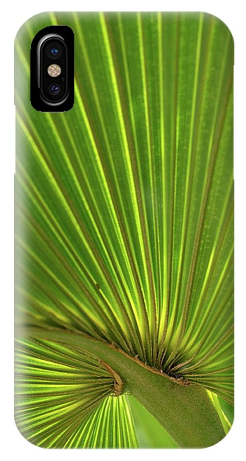 Palm IPhone X Case featuring the photograph Palm Leaf by JD Grimes