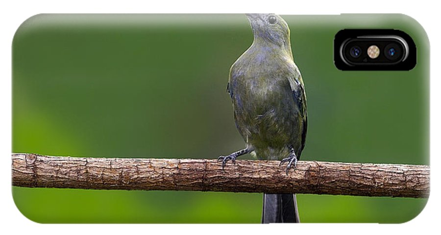 Palm Tanager IPhone X Case featuring the photograph Palm Tanager by Tony Beck