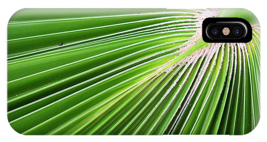 Roena King IPhone X Case featuring the photograph Palm Tree Frond by Roena King