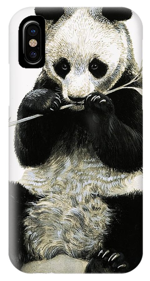 Animals; Nature; Wildlife; China; Panda IPhone X Case featuring the painting Panda by R B Davis