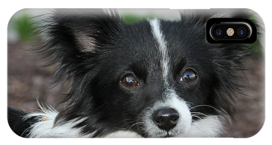 Papillion Dog IPhone X Case featuring the photograph Papillion by Kimber Butler