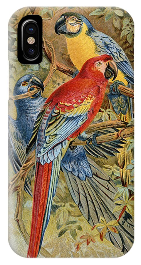 19th Century IPhone X Case featuring the photograph Parrots: Macaws, 19th Cent by Granger