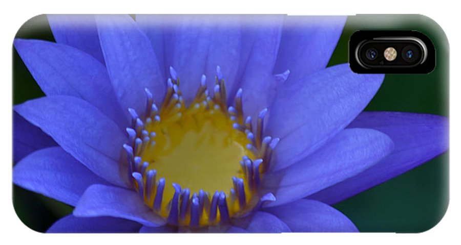 Waterlily IPhone X / XS Case featuring the photograph Passing Time... by Melanie Moraga