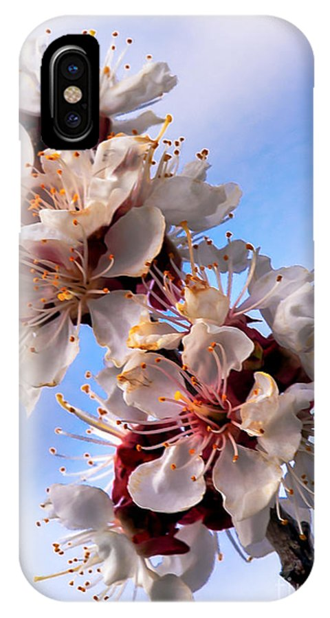 Flowers IPhone X Case featuring the photograph Peach Blossoms by Robert Bales