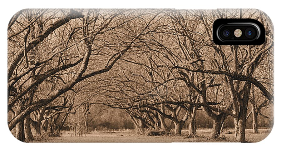 Pecan IPhone X Case featuring the photograph Pecan Orchard by Karen Wagner