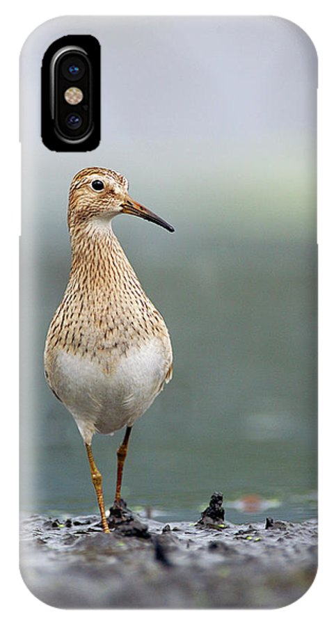 Mp IPhone X Case featuring the photograph Pectoral Sandpiper Calidris Melanotos by Scott Leslie