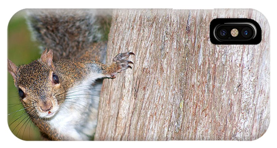 Wildlife IPhone X Case featuring the photograph Peek A Boo by Kenneth Albin