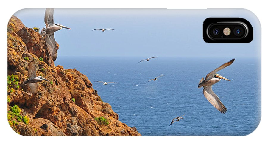 Pelicans IPhone X Case featuring the photograph Pelicans Off The Point by Lynn Bauer