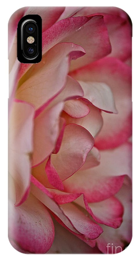 Garden IPhone X Case featuring the photograph Peppermint Rose by Susan Herber