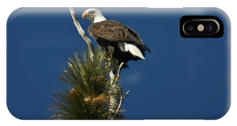Bald Eagle IPhone X Case featuring the photograph Perched by Mitch Shindelbower
