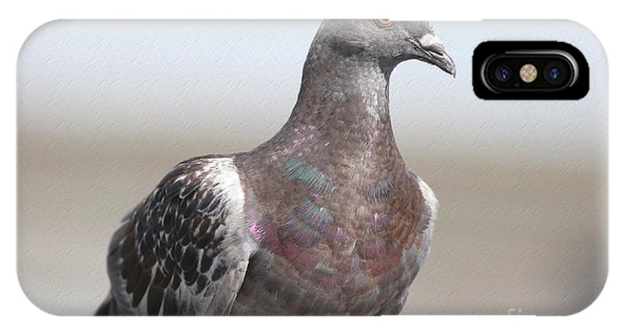 Pigeon IPhone X Case featuring the photograph Perched On The The Dock Of The Bay by Deborah Benoit