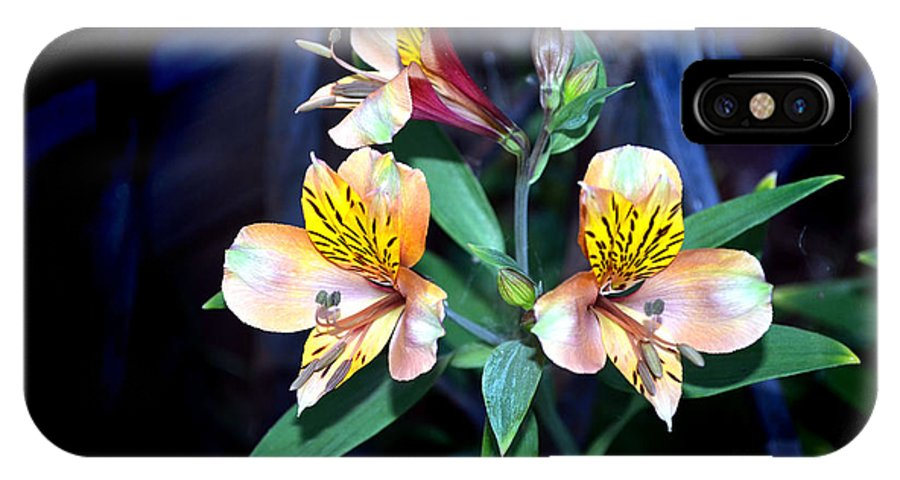 Peruvian Lily In My Garden IPhone X Case featuring the photograph Peruvian Lily In My Garden by Afroditi Katsikis