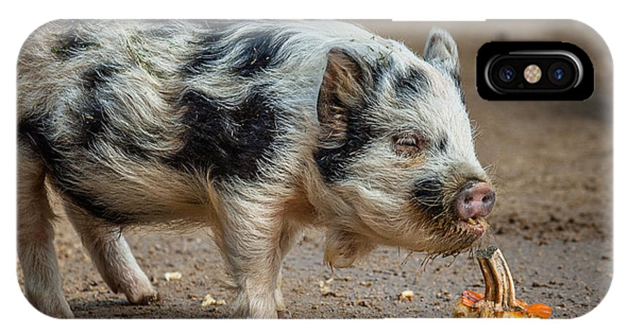 Pig IPhone X Case featuring the photograph Pig With An Attitude by Greg Nyquist