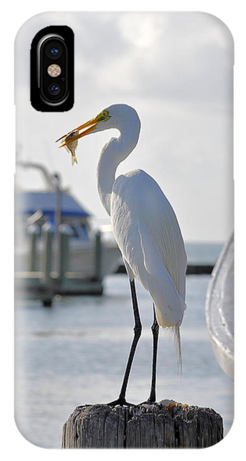 Shrimpboat IPhone X Case featuring the photograph Piggy Perch For Breakfast by Maria Nesbit