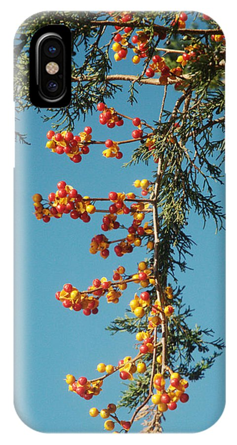 Autumn IPhone X Case featuring the photograph Pine Tree With Berries by Barry Doherty