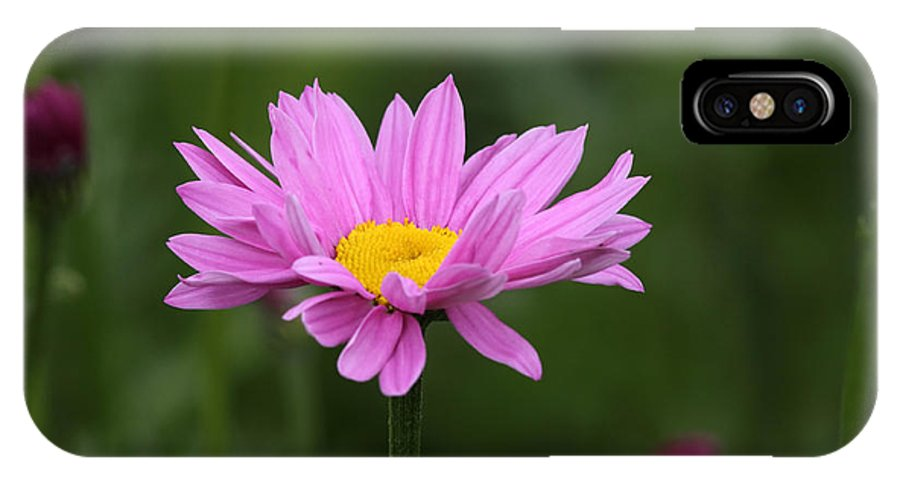 Doug Lloyd IPhone X Case featuring the photograph Pink Daisy by Doug Lloyd