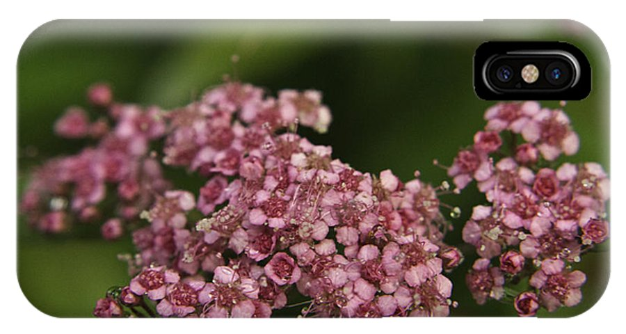 Pink IPhone X Case featuring the photograph Pink Flower Cluster by Douglas Barnett
