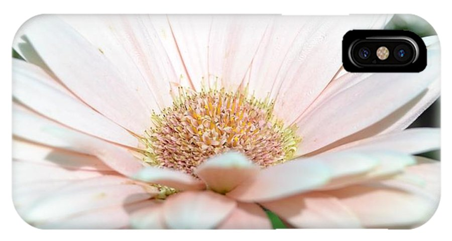 Pink Gerbera Daisy IPhone X Case featuring the photograph Pink Gerbera Flower by P S
