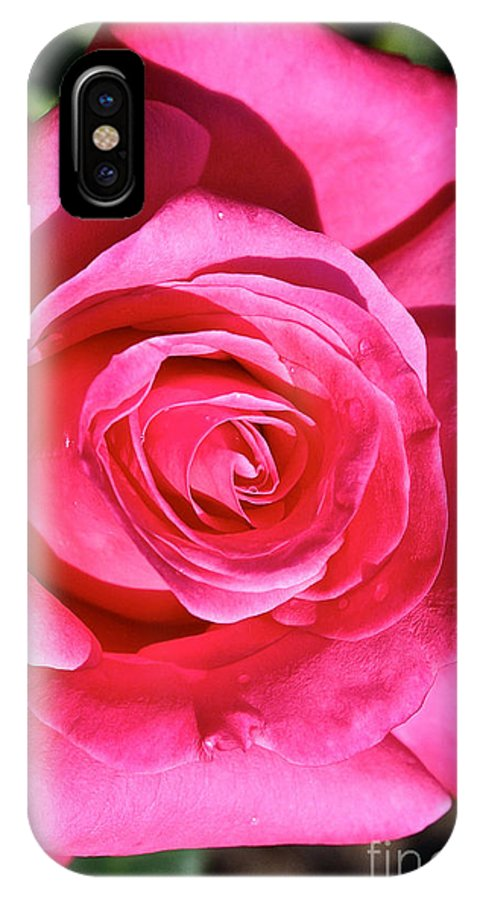 Outdoors IPhone X Case featuring the photograph Pink Sunrise Rose by Susan Herber