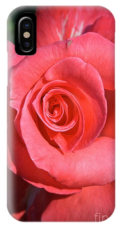 Outdoors IPhone X Case featuring the photograph Pink Tea Rose by Susan Herber